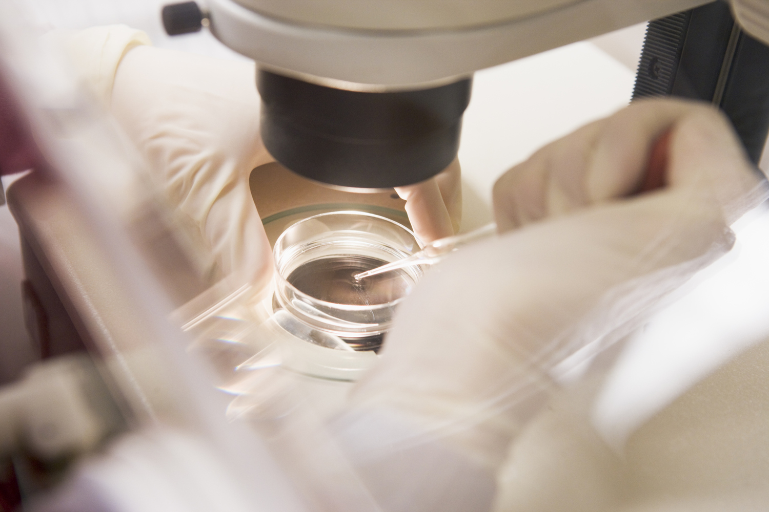 Embryologist transferring egg to a special culture media (selective focus)